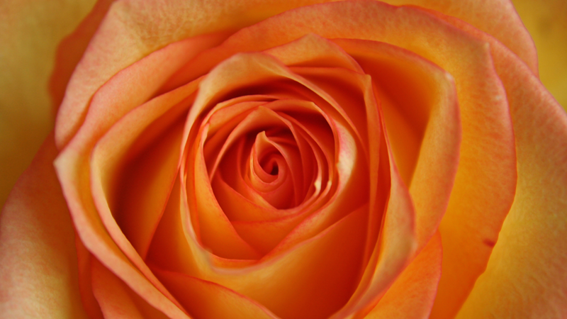 Rose, Orange, Simone Schmid Events im Bereich Farbberatung Hochzeit Knigge und mehr