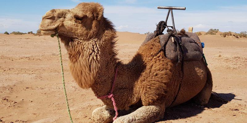 Wie die Wüstenreise nach Marokko mein Leben veränderte